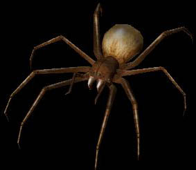 Depths of Peril - Giant Spider